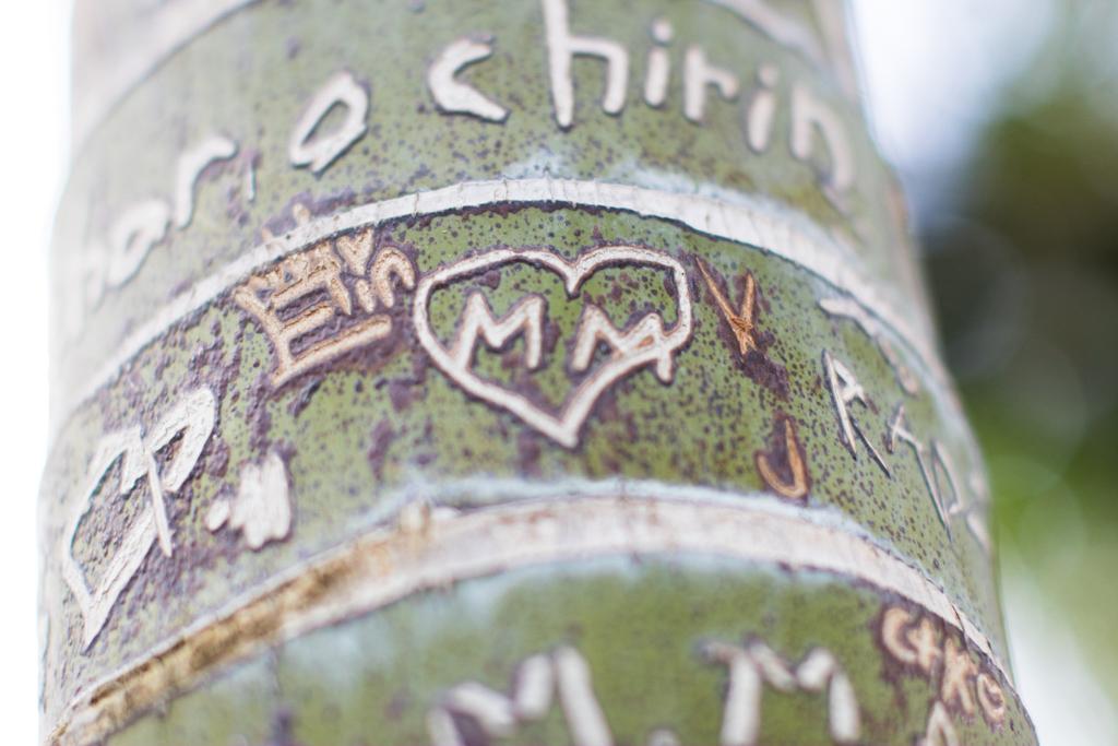 En Wedding Planner bland palmerna, på Palmhuset i Göteborg - Vackra stammar på Palmhuset i Göteborg | photobymj.se