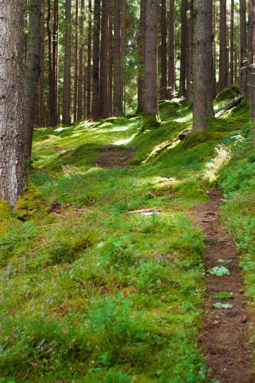 Jag har fotat en Älva och en Rockstjärna i skogen!- Stigen till vigselplatsen! | photobymj.se