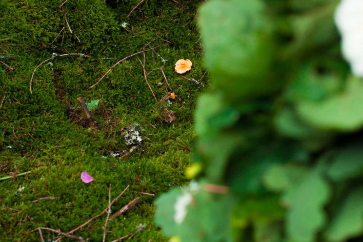 Jag har fotat en Älva och en Rockstjärna i skogen!- Vigselplats i skogen! | photobymj.se