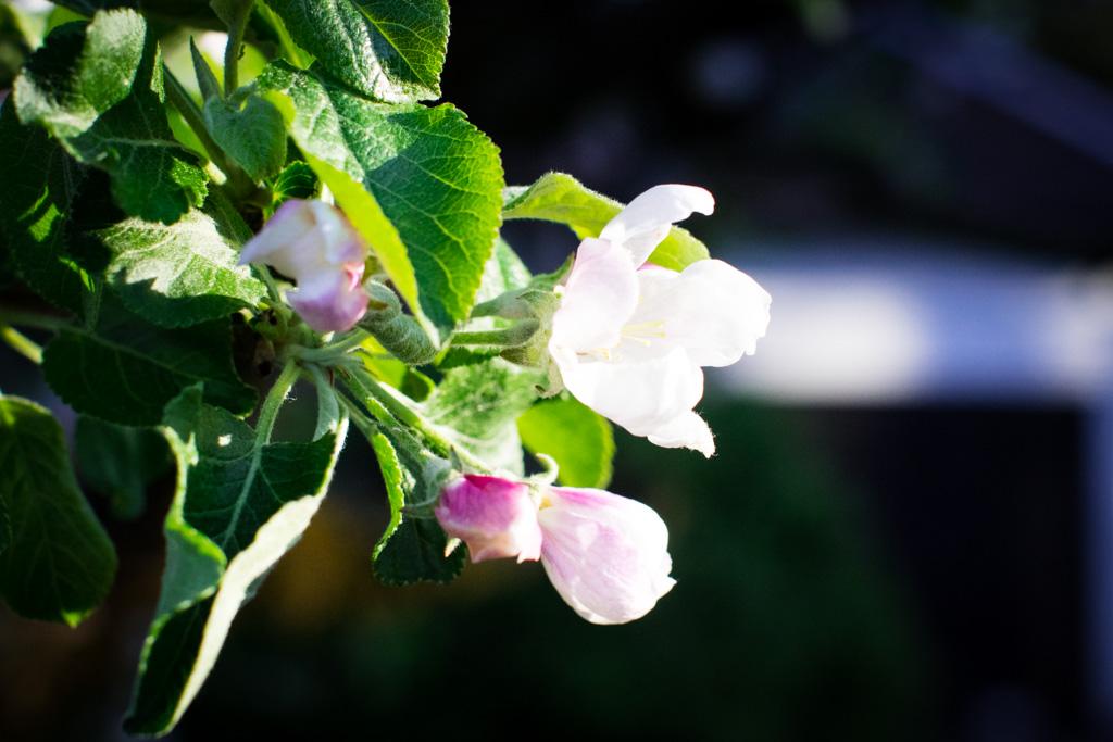Kompisbilder - BFF's forever and ever - Porträtt närbild blommor | photobymj.se